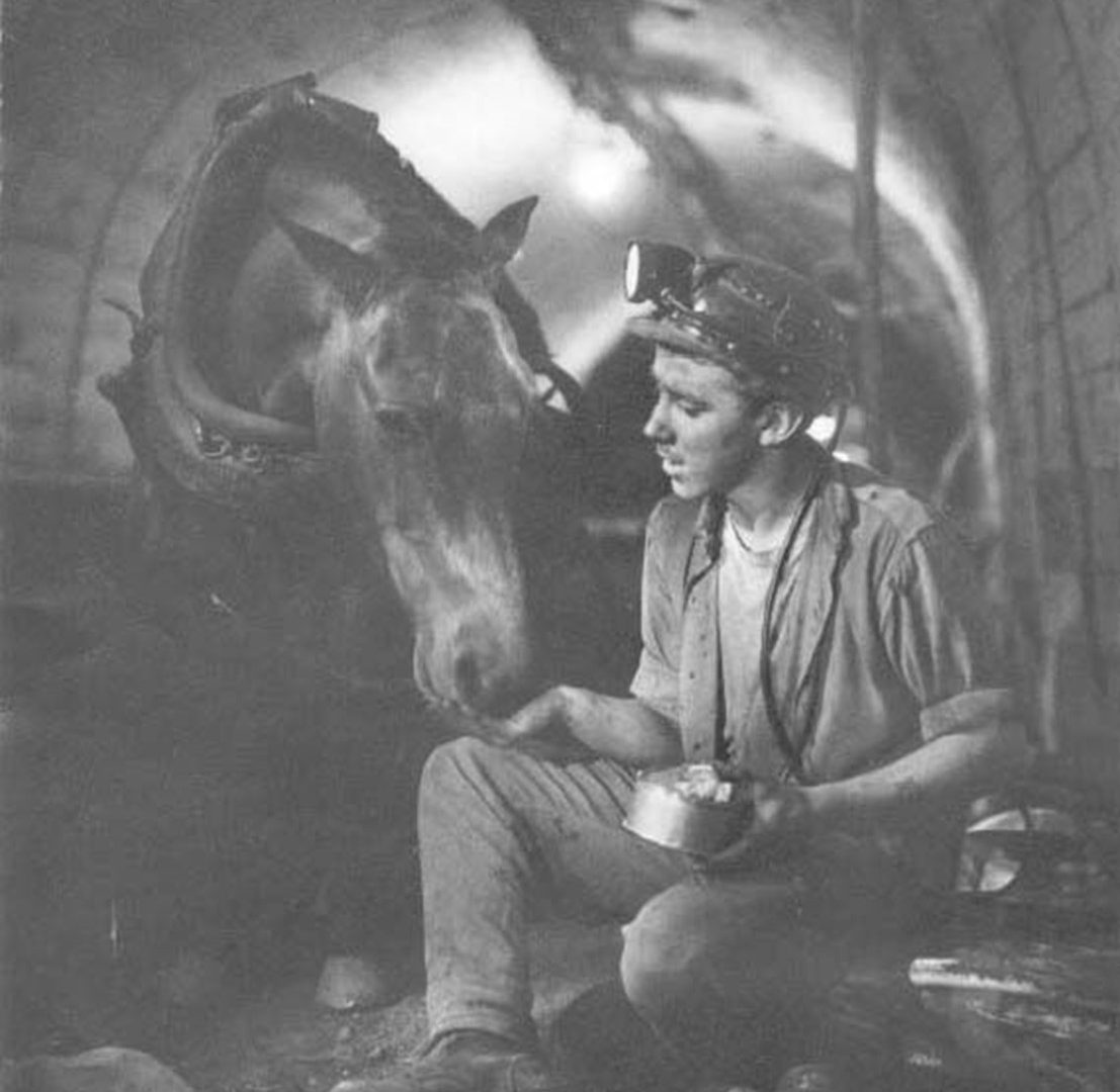 Voices in the Coalshed: Pony Drivers